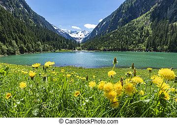 zillertal, montagnes, fleur, tyrol, lac, tôt, lac, stillup, autriche, summer., prés, paysage
