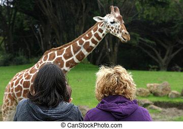 zoo, vue